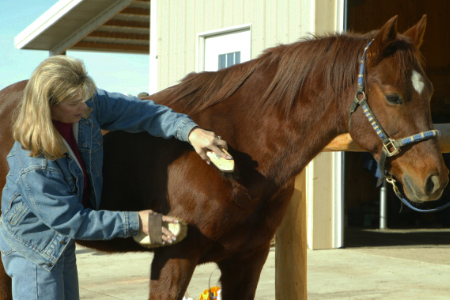 Woman grooming her horse