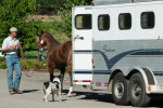 unloading_horse450x300