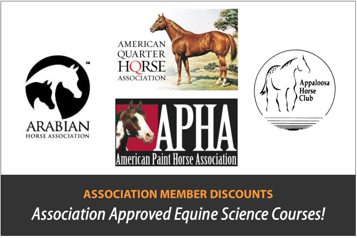 Educating Equine Enthusiasts for 30 Years! | Horse home