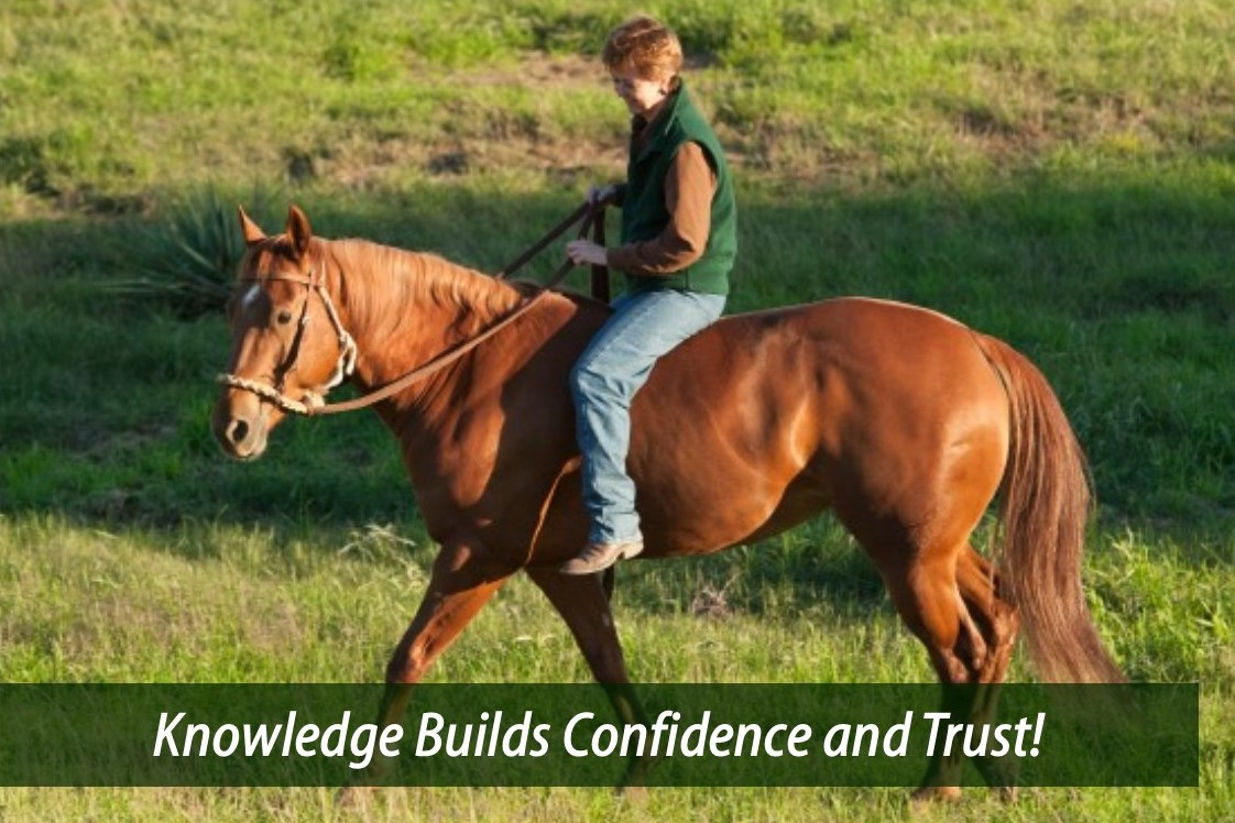 Equine Reiki Home Study Course: Distance Learning Online ...