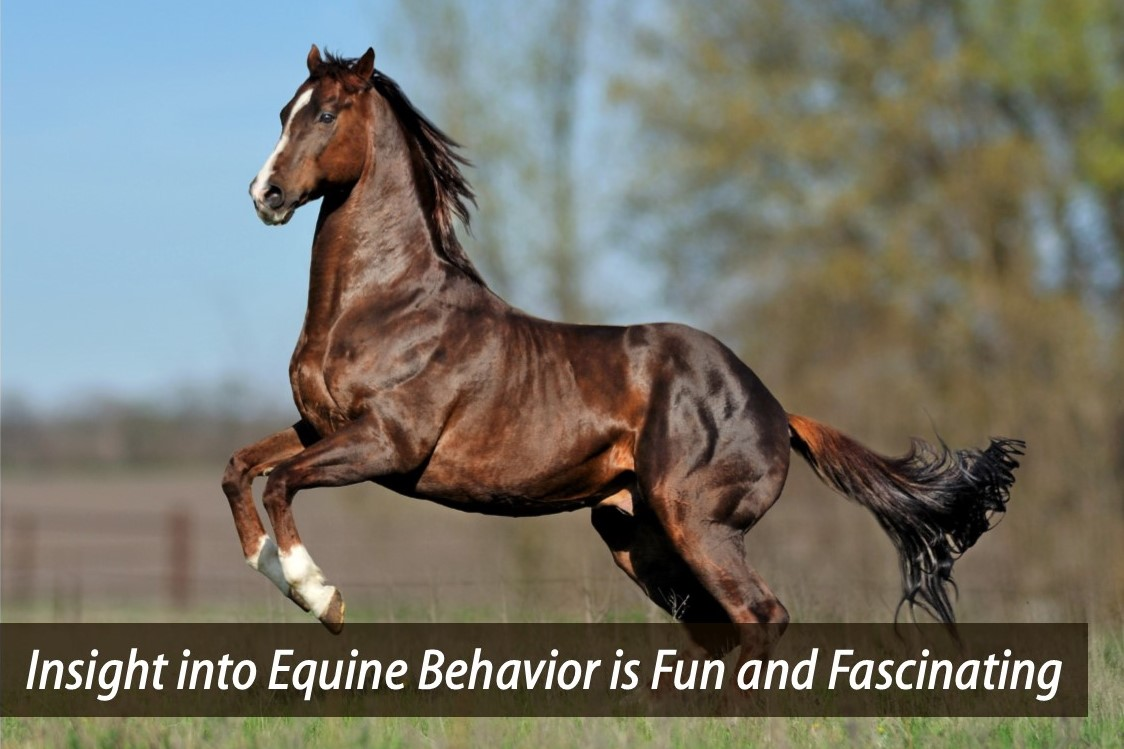 Equine Distance Learning - Home | Facebook