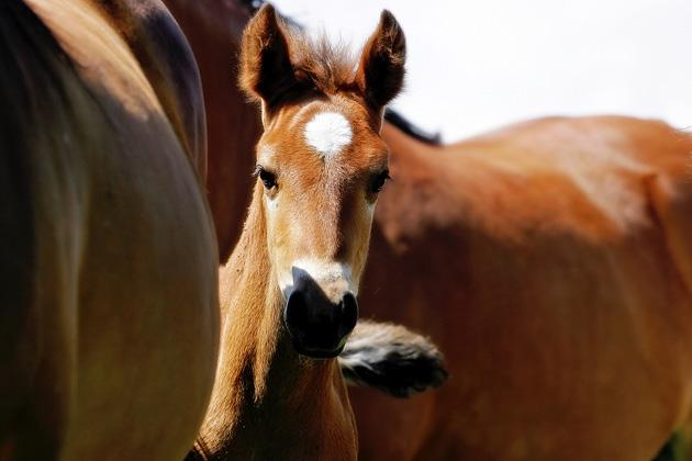 Peeking Foal